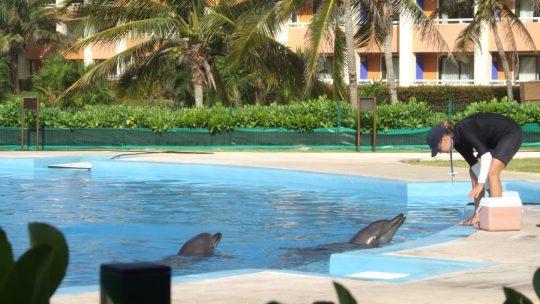 Tulum: Dolphintastic