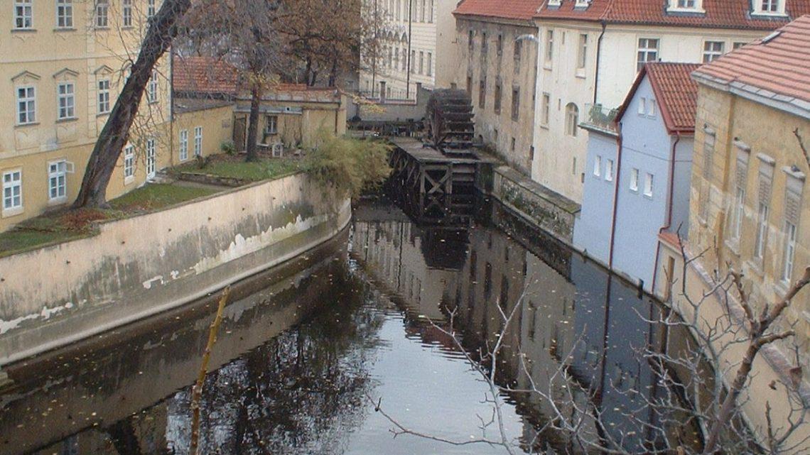 How bizarre – Cats in Prague