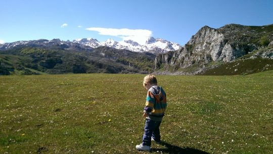 Los Picos de Europa – did someone say moo?
